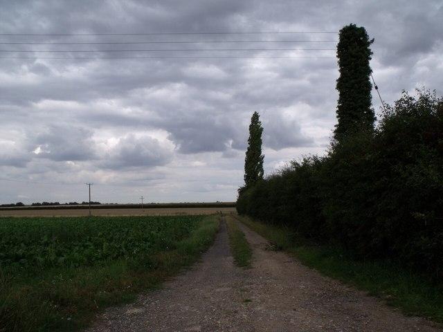 Track to Sheath Wood