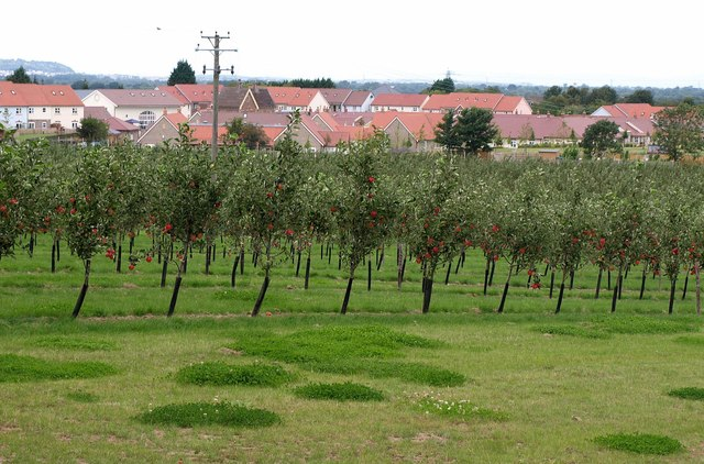 New orchard, new housing, Sandford