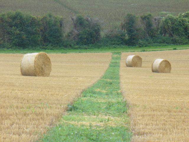 Follow the Green Grass Road