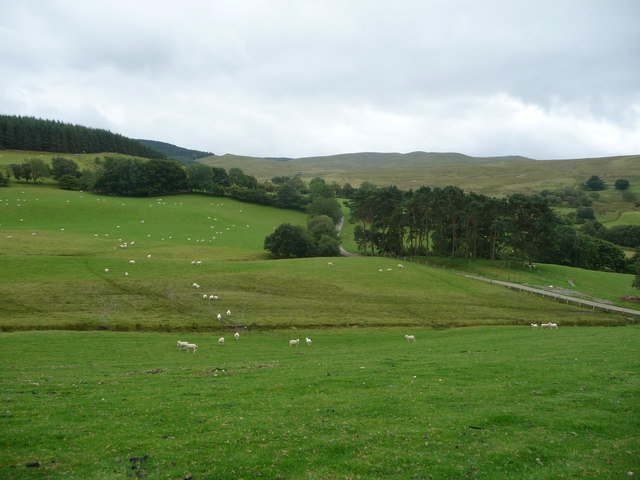 Sheep pasture near Bryneithinog