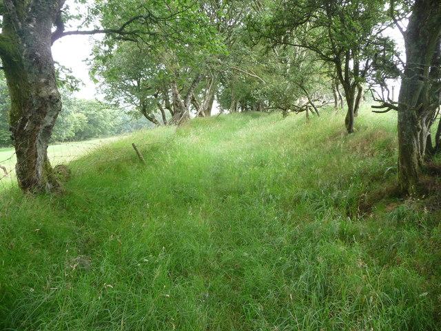 Old sunken way above Talwrn