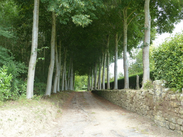 Avenue of Limes