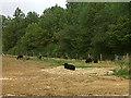 SK8806 : Black sheep by Stephen Craven