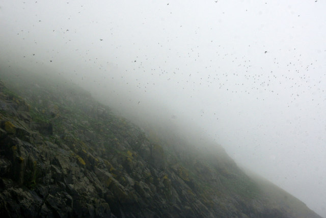 Puffins over the slopes of Dun, St Kilda