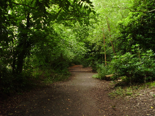 Woodland path, Eastham Country Park