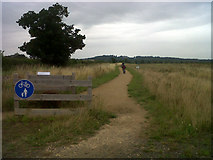 SK8707 : Cycle track round Rutland Water by Stephen Craven