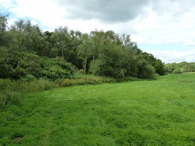 Nunnery Wood at Paxhill Park