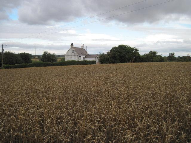 Hollins  Farm  over  Wheat