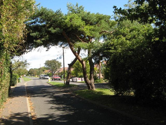 Trees in Sea Lane
