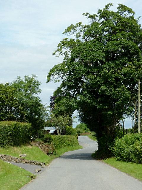 Lane approaching Llwyn-y-Groes, Ceredigion