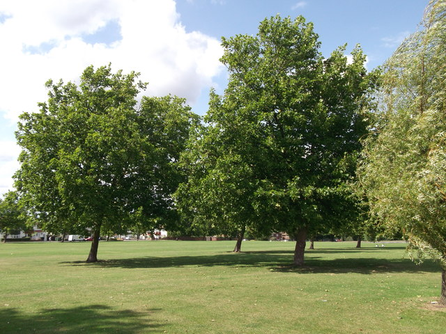 Trees in Crouch Croft Recreational Ground