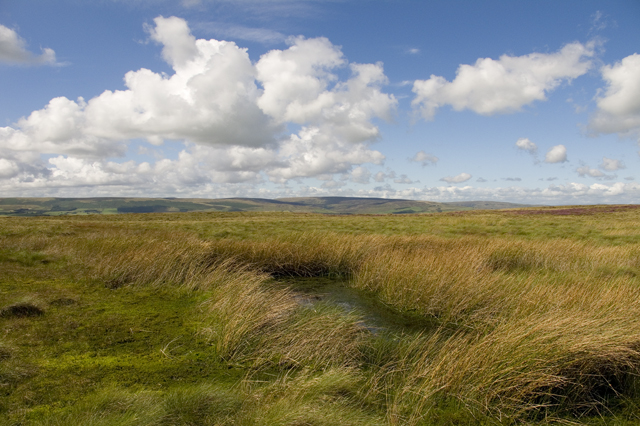 Reedy Tarn on Easington Fell