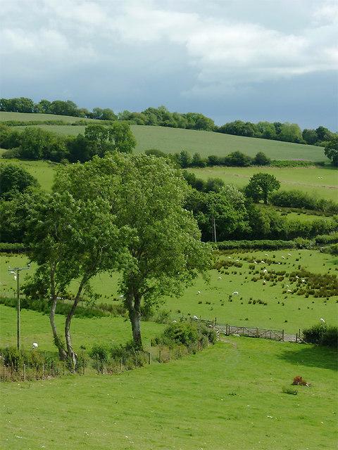 Farmland south-west of Llwyn-y-Groes, Ceredigion