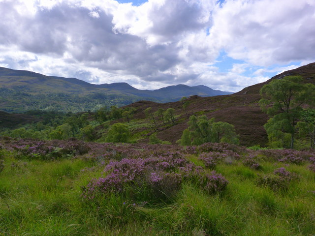 Moorland above Neaty Burn