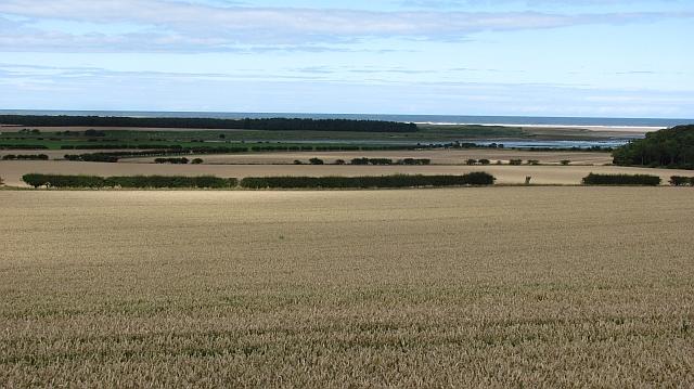 Wheat, Easington