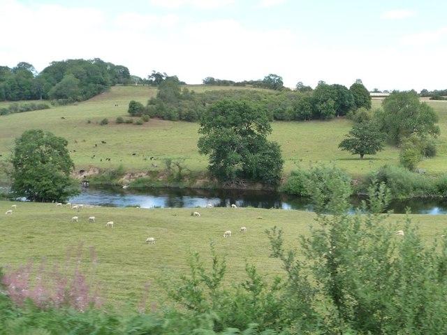 Sheep grazing along the Severn