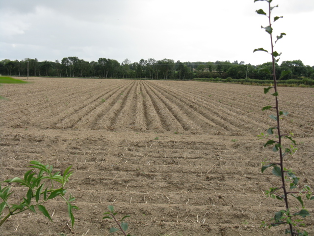 Ploughed field by the lane from Ledicot