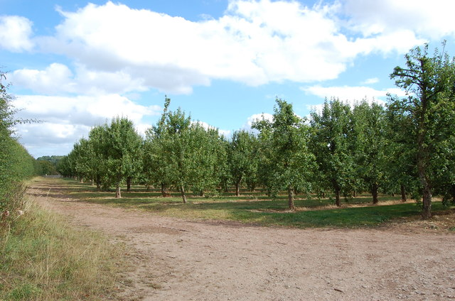 Orchard, near The Verzons