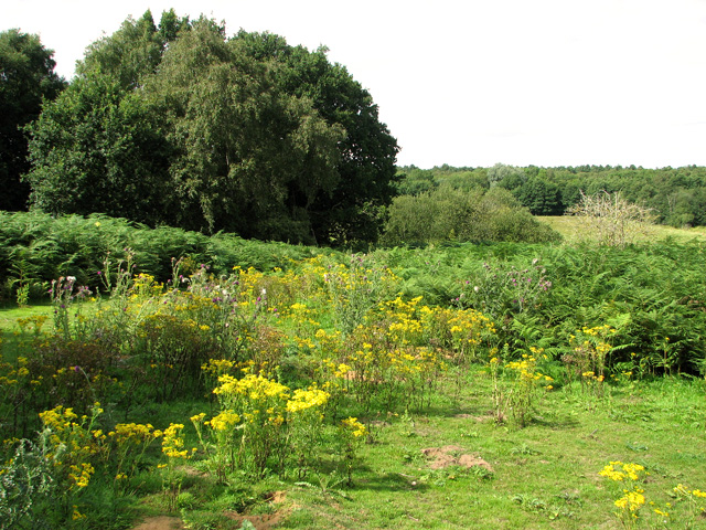 Pasture west of Reckham Pits Wood, Leiston Common