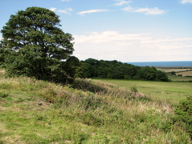 View towards Crockley's Plantation from The Hangs, Cley