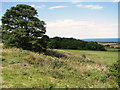 TG0642 : View towards Crockley's Plantation from The Hangs, Cley by Evelyn Simak