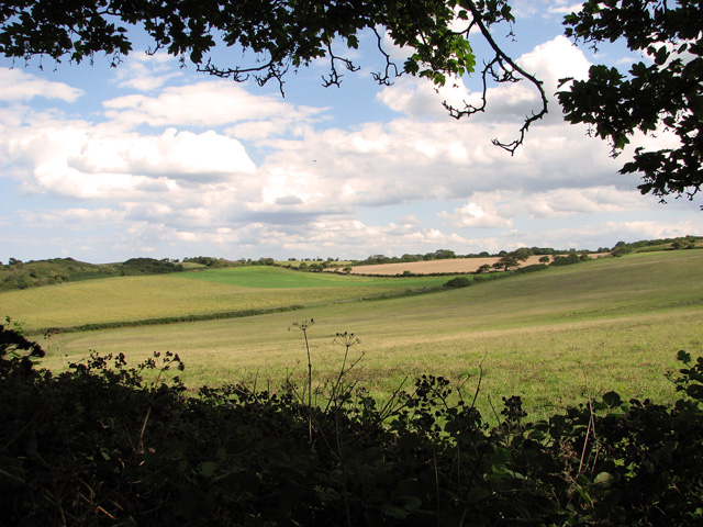 View from the edge of Crockley's Plantation