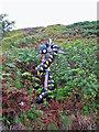 NG3731 : Tattie serpent by Richard Dorrell