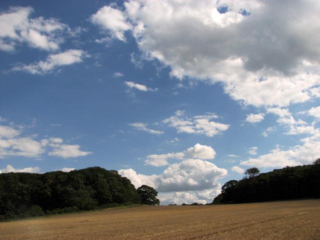 Crockley's and Cop Hill Plantations, Cley