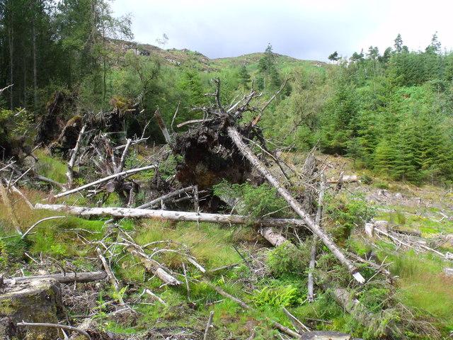 Edge of clearfell in Loch Ard Forest near Aberfoyle