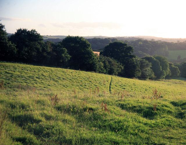 Farmland in the evening light