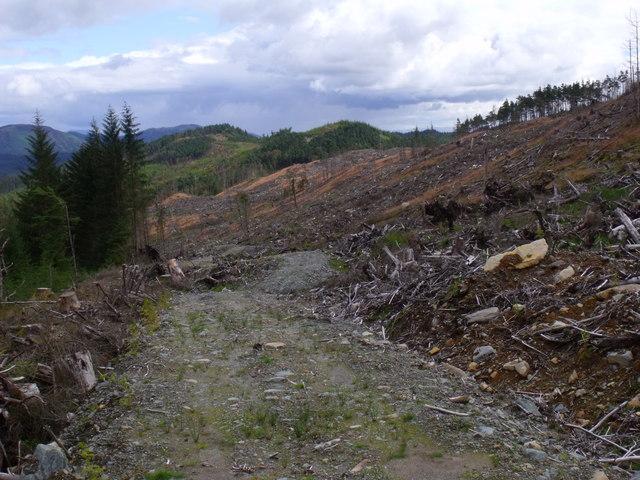 Service path through clearfell in Loch Ard Forest near Aberfoyle