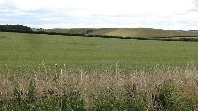 Arable land near Bamburgh