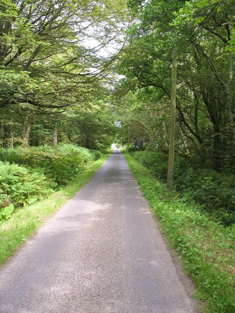 Road through woodland, Gigha