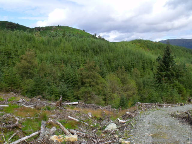 Prospect north from service path in Loch Ard Forest near Aberfoyle