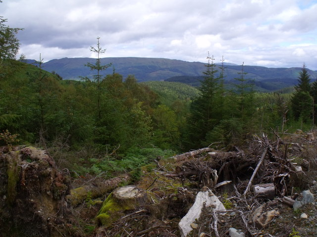Boundary between clearfell and forestry by a minor burn in Loch Ard Forest near Aberfoyle