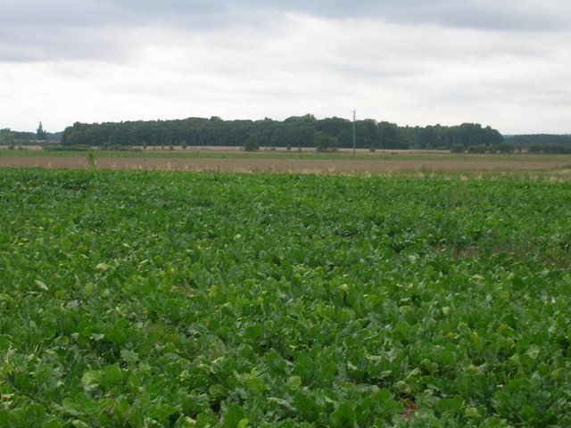 Crop field south of New Rossington