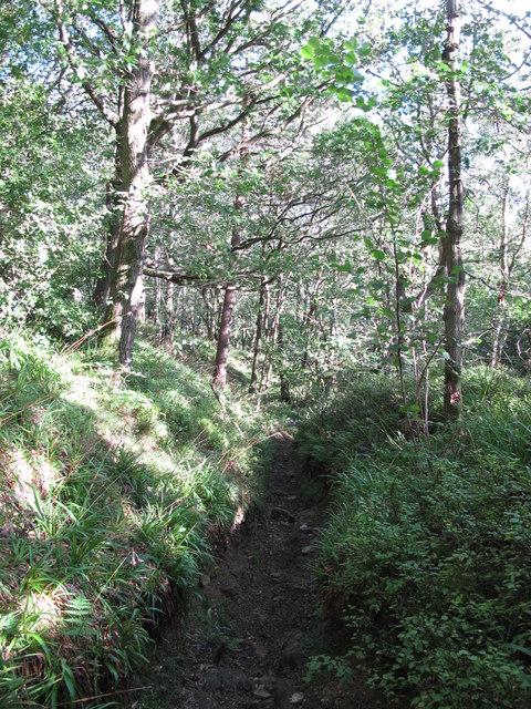 Sunken path in the woods above West Dipton Burn