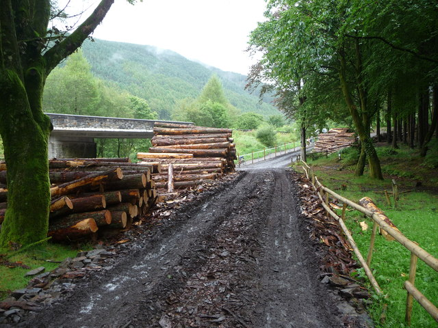 Log stacks in Afan Forest Park