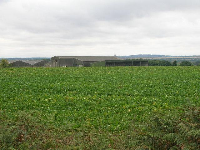 Farmland, Hunster Grange Farm