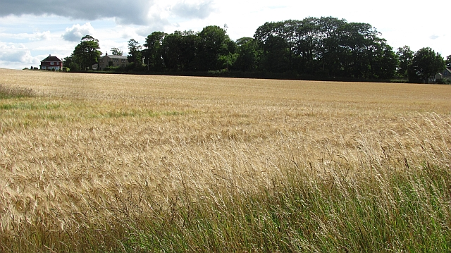 Barley field, Waren Mill