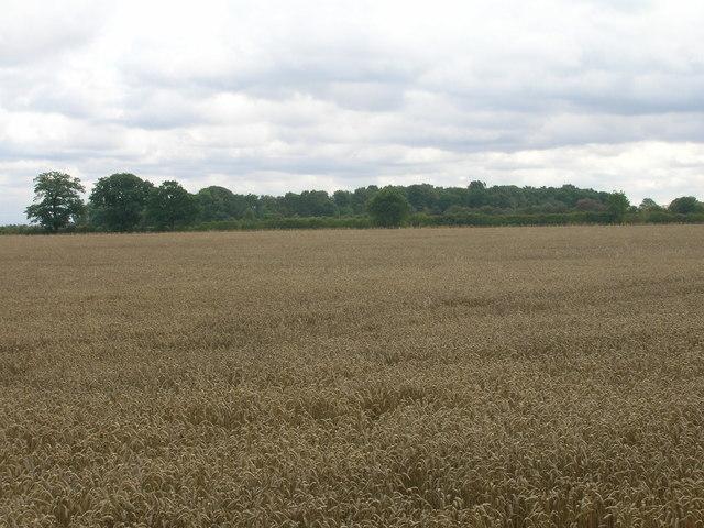 Farmland off the A638