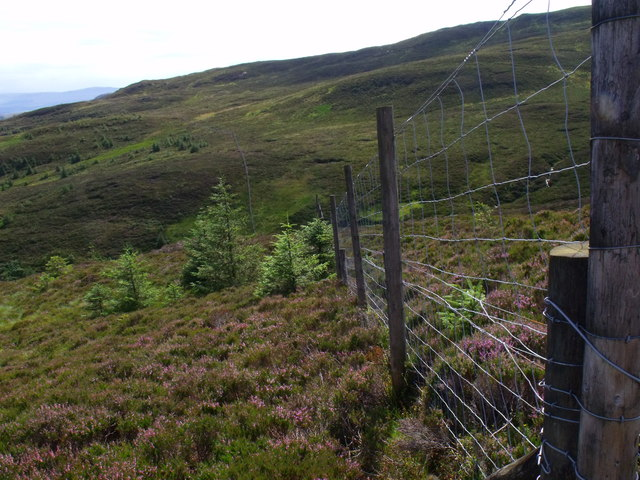 Fence line heading east from line of Drymen High Road path in Loch Ard Forest  near Aberfoyle