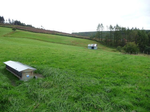 Hut in the field above Tycanol