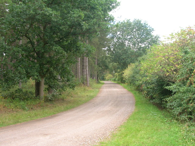 Track through Bawtry Forest