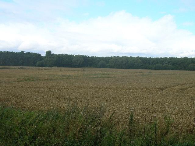 Farmland off Sheepwash Lane