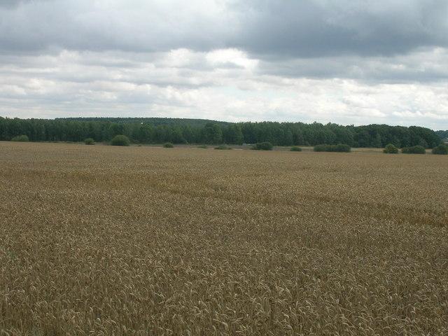 Farmland off Stancil Lane