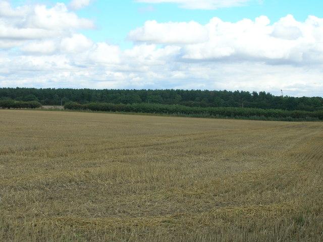 Farmland off Bawtry Road
