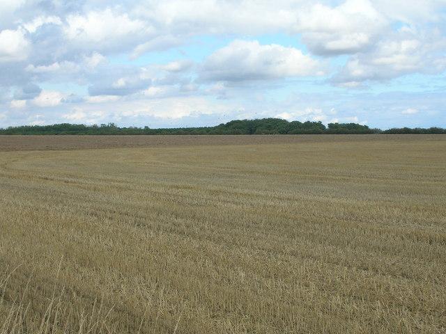 Farmland near Tickhill Grange