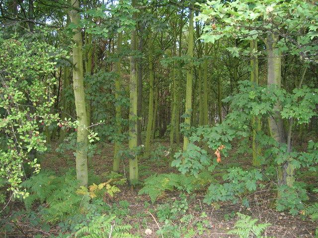 Swinnow Wood