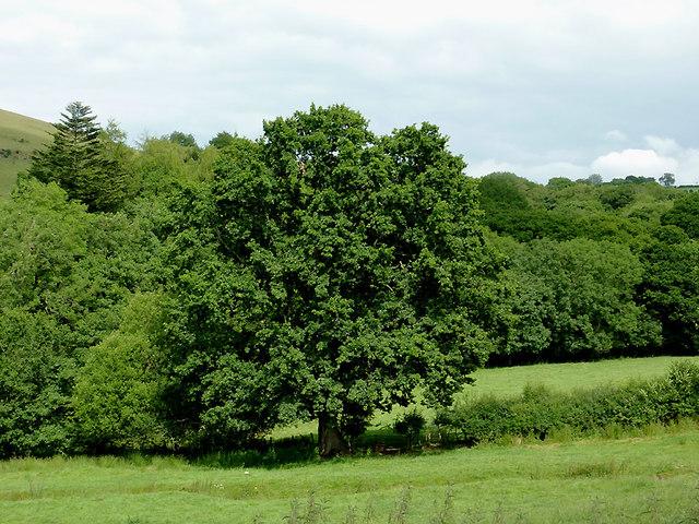 Pasture and woodland west of Llwyn-y-Groes, Ceredigion